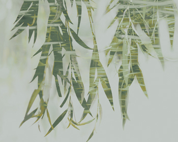 Bamboo Verde Print by Tania Bello