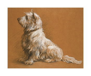 Drawing Of A West Highland Terrier Fine Art Print by Herbert Dicksee