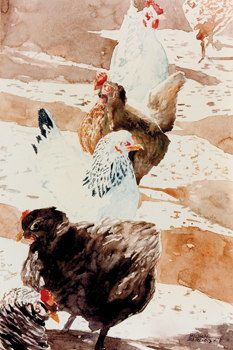 Free Range Chickens Canvas Print by Micheal Zarowsky
