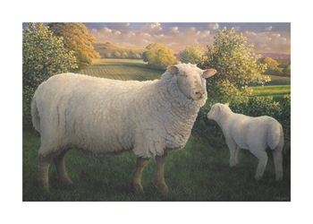 Ewe And Lamb Fine Art Print by James Lynch