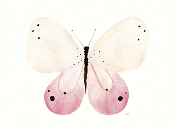 Flutterby Harmony Canvas Print by Joelle Wehkamp