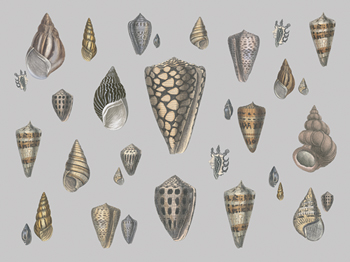 Selection of Shells Compendium Canvas Print by Maria Mendez