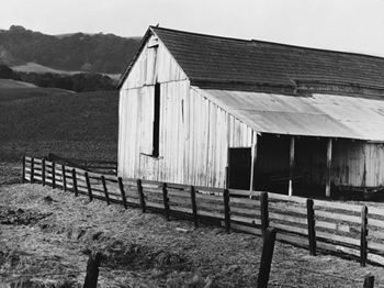 California Dairy Ranch Canvas Print by Dorothea Lange