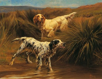 English Setters in a Marshland Print by Thomas Blinks