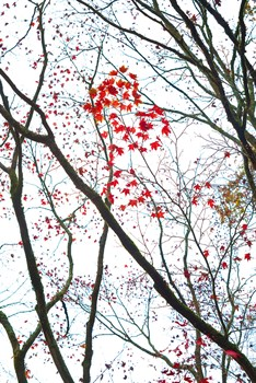 Autumn Flash Print by Peter Adams