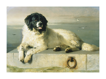 A Distinguished Member Of The Humane Society Print by Edwin Landseer
