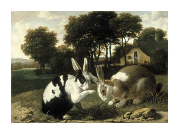 Two Rabbits In A Landscape by 17th Century Haarlem School Standard