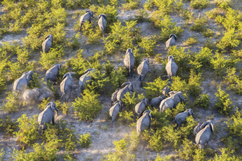 On the Move - Elephants Print by Peter Adams