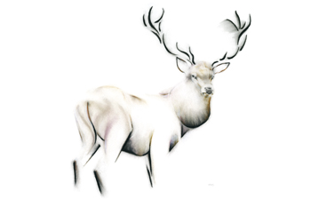 Fine Stag Canvas Print by Kellas Campbell