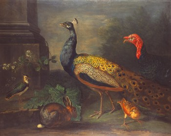 A Turkey, Peacock, Peewit, Rabbit Fine Art Print by Johann Wenzel Peter (circle of)