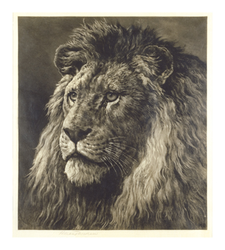 Lion Fine Art Print by Herbert Dicksee