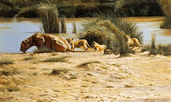 At the Waterhole Fine Art Print by Spencer Hodge