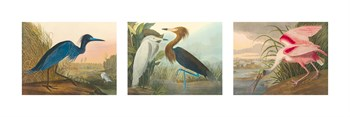 Birds of America Print by James Audubon