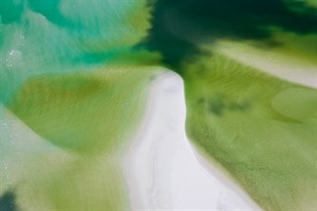 Green Tide I Print by Peter Adams