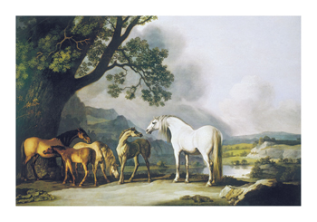 Grey Stallion with Mares and Foals Fine Art Print by George Stubbs