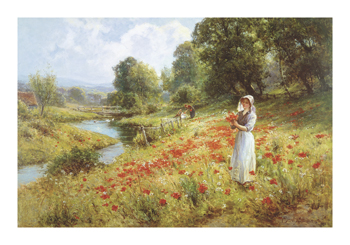 Flowers of the Field Fine Art Print by Ernest C. Walbourn
