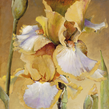 Golden Iris II Canvas Print by Carney