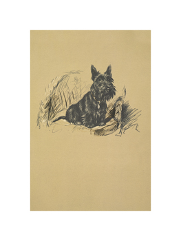 A Scottie Fine Art Print by Lucy Dawson