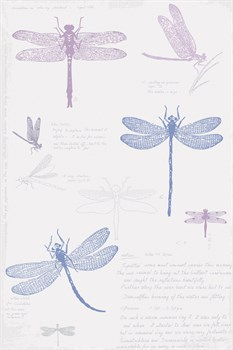 Dragonfly Sketchbook Print by Maria Mendez