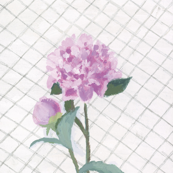 Best in Show - Peony Print by Charlotte Hardy
