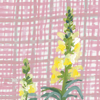 Best in Show - Snapdragon Print by Charlotte Hardy