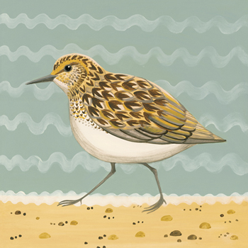 Serious Sanderling Print by Catriona Hall