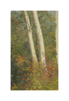 Birch Trees in Autumn Fine Art Print by Frederic Edwin Church