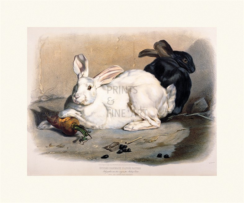 Black and white rabbits fine art print by louis soulange teissier