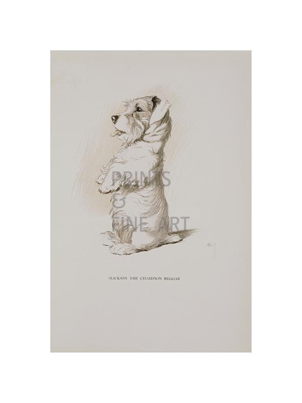 champion beggar by cecil aldin prints and fine art